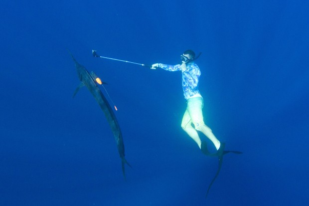 Friederichs, in the waters off Costa Rica, ensures a Crittercam is securely mounted to the dorsal fin of a Pacific sailfish. Photo by Adrian Gray.