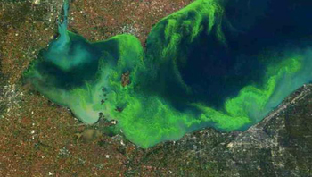 Algae Blooms in Lake Erie
