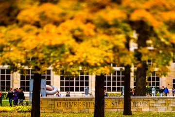"""Students walk along Sabo Plaza amidst trees covered in yellow autumn leaves and a """"University of St. Thomas"""" sign October 13, 2014."""