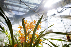 Sunlight streams into the John R. Roach Center for the Liberal Arts' greenhouse.