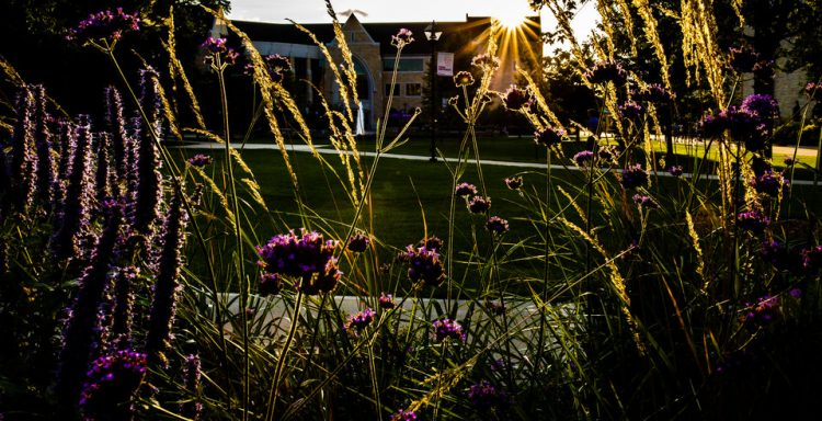 The Anderson Student Center is seen through purple and gold plants and a setting sun.