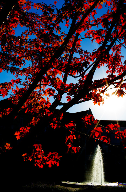 Red leaves on a tree frame the Harpole Memorial Fountain Oct. 9. (Photo by Mike Ekern '02)